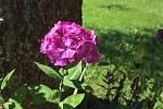 Zahrada poznání nádherně kvete