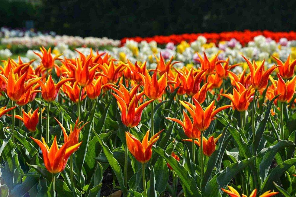 Rozkvetlé zahrady