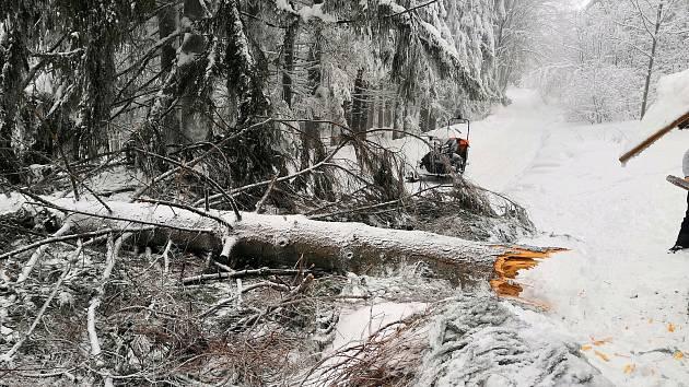Padající strom zasáhl v neděli 13. ledna 2019 na hřebeni Javorníků běžkařku. K vážně zraněné ženě museli horští záchranáři.