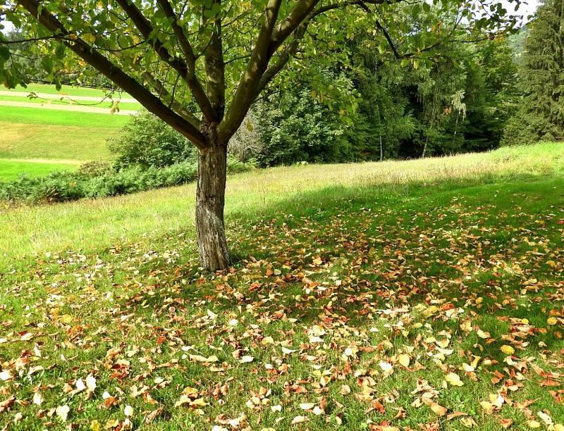 Podzimní mámení záčíná