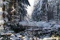 Polomy na hřebenech Vsetínských Beskyd trápí horskou službu i běžkaře. Situace ze 4. týdne ledna 2019.