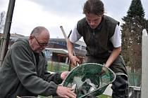 Vsetínští rybáři vysadili do Vsetínské Bečvy v pátek 19. dubna 2013 sedm metráků pstruhů dovezených ze Slovenska.