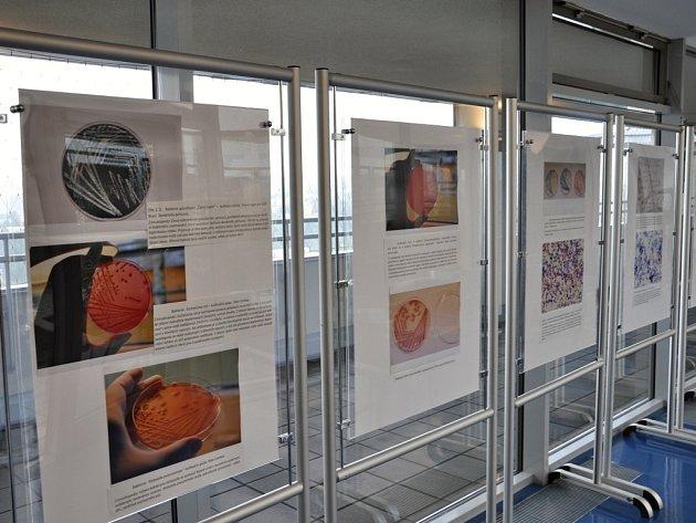 PANELY s fotografiemi z optického mikroskopu si lidé mohou prohlédnout v budově krajského úřadu.