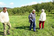 Manželé Pařenicovi sadili sad před dvanácti lety. Jan Surý, který koupil polovinu sadu začal mezi stromy stavět plot. Zda na správném místě a jestli na základě souhlasu řeší úřady.