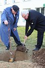 Lidickou hrušeň vysadili ve středu 28.11.2018 na zahradě ZŠ Žerotínova ve Valašském Meziříčí. Aktu se zúčastnili potomci lidických žen Antonín Nešpor a Miroslav Kaliba (vpravo).