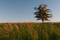 Javor roste mezi Velkou a Malou Lhotou na dohled od Valašského Meziříčí a Rožnova pod Radhoštěm.