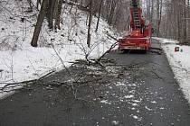 Padající stromy zachytilo telefonní vedení.