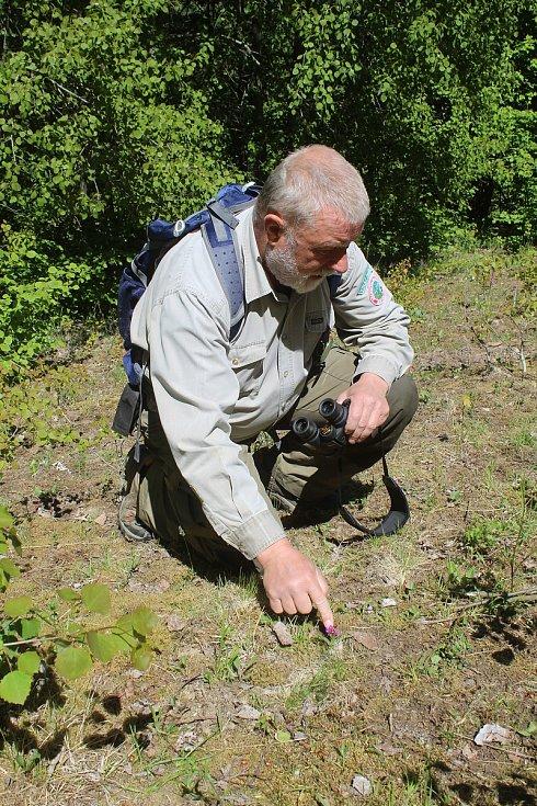 Jaromír Navrátil je dobrovolným strážcem CHKO Beskydy. Pulčínské skály mu učarovaly už v dětství. Je i okolí chrání už přes čtyřicet let. Jedním z mnoha skvostů zdejší přírody je vzácný prstnatec májový.