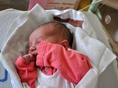 Mamince prvního miminka narozeného v roce 2015 ve Vsetínské nemocnici a.s. Haně Hromadové přišel poblahopřát náměstek hejtmana Zlínského kraje pro oblast zdravotnictví MUDr. Lubomír Nečas