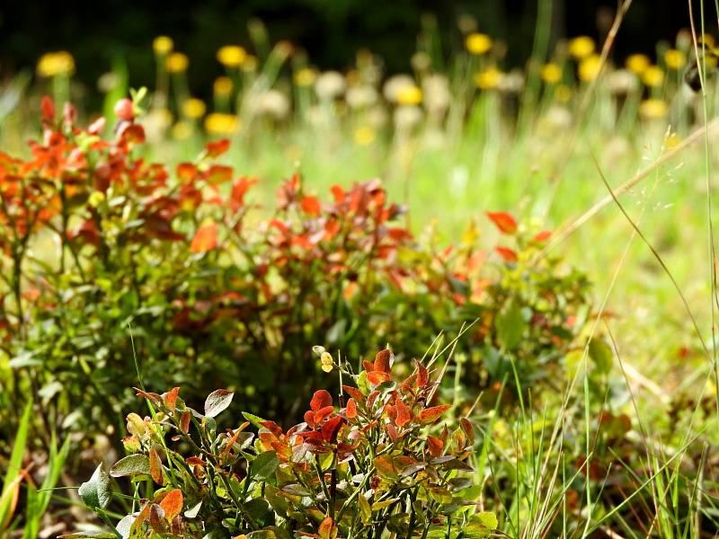 Poslední záchvěvy léta vystřídá pomalu ale jistě podzim