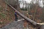 Lesní dělníci těží kůrovcové dřevo na Karlově kopci v Rožnově pod Radhoštěm.