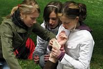 Oblastní spolek Českého červeného kříže Vsetín uspořádal v úterý 6. května ve zdejší Panské zahradě tradiční soutěž mladých zdravotníků. Zúčastnilo se jí celkem dvanáct zdravotnických hlídek z prvních i druhých stupňů základních škol z Valašska.
