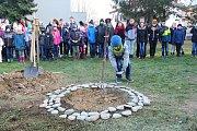 Lidickou hrušeň vysadili ve středu 28.11.2018 na zahradě ZŠ Žerotínova ve Valašském Meziříčí. Žáci položili ke stromku devadesát oblázků se jmény a věkem dětí, které běsnění nacistů nepřežily.