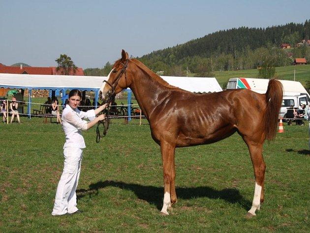 V areálu Jezdeckého klubu Valašsko na Prostřední Bečvě se prvního května konal sedmnáctý ročník výstavy koní na Valašsku.