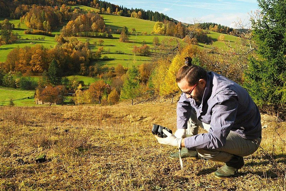 Výsadba mateřídoušky na beskydských pastvinách.