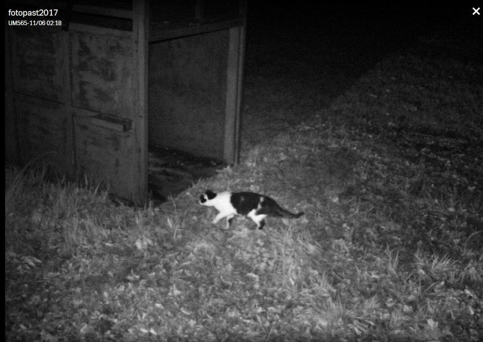 Tým expertů vytvářel od pondělí 5. listopadu 2018 pachové stopy na Karlovicku. Lákají medvěda ke kleci. Jediná šelma, která se ke kleci přiblížila byla kočka.