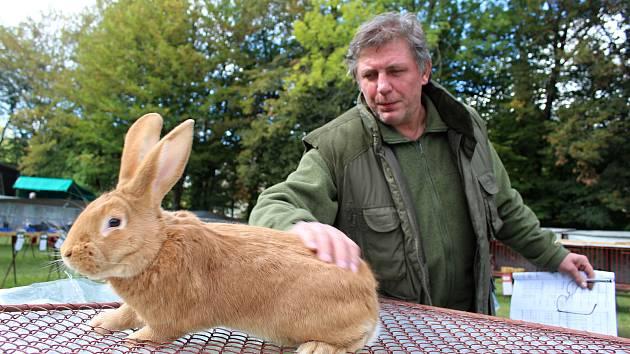 Milan Klíma, předseda Základní organizace Českého svazu chovatelů ve Vsetíně s jedním ze svých vystavených králíků. Jedná se o králíka burgundského.