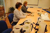 Pracovníci Charity Valašské Meziříčí sčítají peníze vložené dárci do pokladniček při Tříkrálové sbírce v lednu 2020.