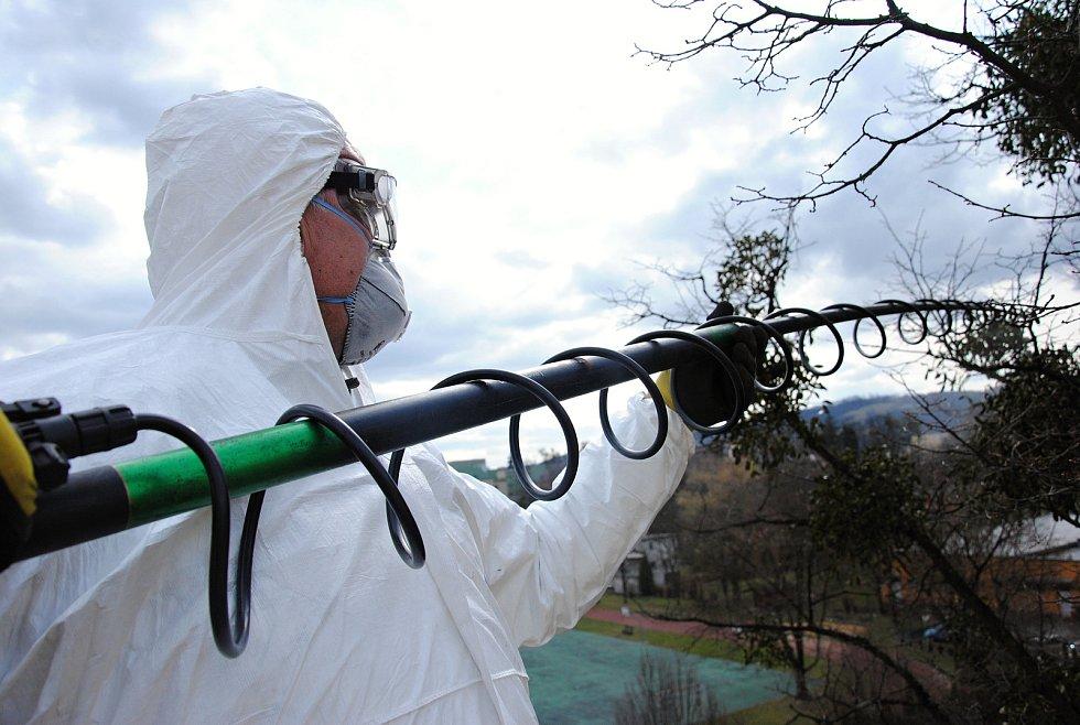 Pracovník brněnské firmy Safe Trees likviduje chemickým postřikem jmelí na stromech ve Valašském Meziříčí; úterý 19. března 2019