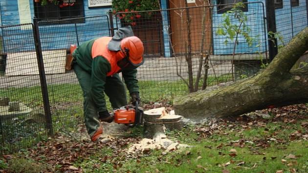 Pracovníci Technických služeb začali s kácením stromů v parku u trati ve Vsetíně. Padnout má třicítka stromů na trávnické i rybnické straně. Místo nich chtějí vysadit stromy nové.