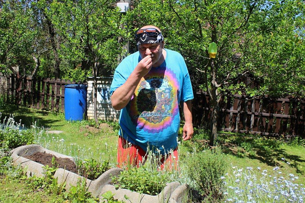 Zdeněk Hrachový, kapelník skupiny Fleret, přežil Koronavirus ve svém domku díky práci na zahrádce a malé podkrovní zkušebně. Vlastnoručně vypěstované bylinky používá na čaje a při vaření.