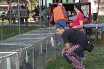 Areál chovatelů drobného zvířectva v Zašové se otevřel milovníkům šlectěných holubů, králíků, slepic či kachen