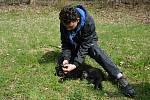Psi nemohli v době pandemie na cvičáky. Chybí jim socializace. Na snímku Tomáš Václavík se štěnětem německého ovčáka Amonet.