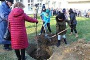 Lidickou hrušeň vysadili ve středu 28.11.2018 na zahradě ZŠ Žerotínova ve Valašském Meziříčí. Hlínu ke kořenům přihodili také žáci školy.