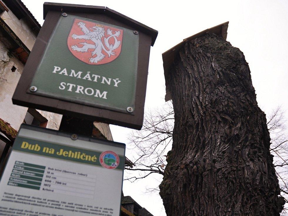 Památný dub na Jehličné v Krhové u Valašského Meziříčí musel být kvůli špatné kondici pokácen.