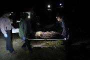 Ochránci přírody přenášejí na nosítkách uspanou medvědici, kterou v pondělí 8. dubna 2019 večer odchytili do speciální klece v oblasti Lysé hory v Beskydech.
