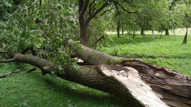 Odstranění části poškozeného stromu u obce Růžďka