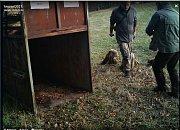 Tým expertů vytvářel od pondělí 5. listopadu 2018 pachové stopy na Karlovicku. Lákají medvěda ke kleci.
