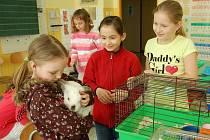 V Rokytnici si přinesly děti do základní školy svá zvířata.