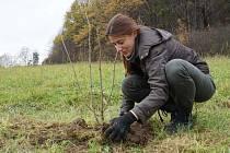 Výsadba keřů a solitérních dubů letních a jabloní podél polní cesty a na okraji pastvin pod statkem na Hradisku v Rožnově pod Radhoštěm.