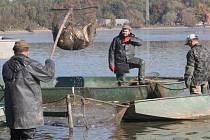 Tradiční výlov přilákal o víkendu k břehu rybníka Choryně Velká zástupy lidí.
