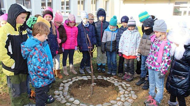 Lidickou hrušeň vysadili na zahradě ZŠ Žerotínova ve Valašském Meziříčí