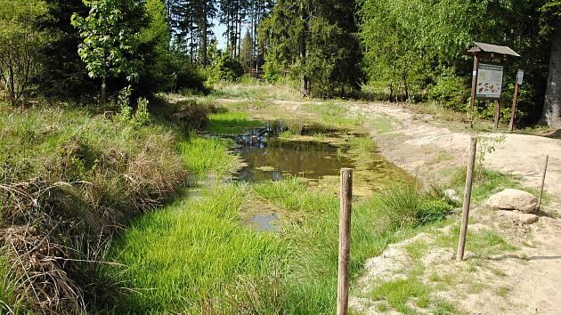 Lesní tůň u Čertových skal v Lidečku - současný stav; květen 2020.