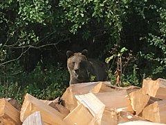 V údolí Vranča v Novém Hrozenkově se ve čtvrtek 13. září 2018 objevil medvěd.