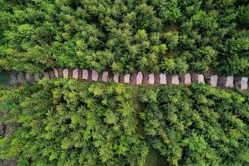 Letecký pohled na sérii tůní vybudovaných na nepoužívané přibližovací lince pro stahování dřeva na severním svahu Velkého Javorníku v Beskydech.