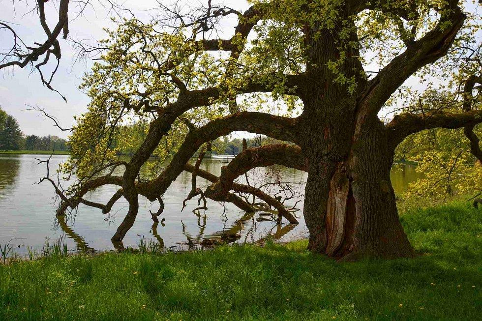 Majestátný strom