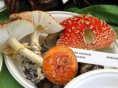 Výstava hub. Ilustrační foto
