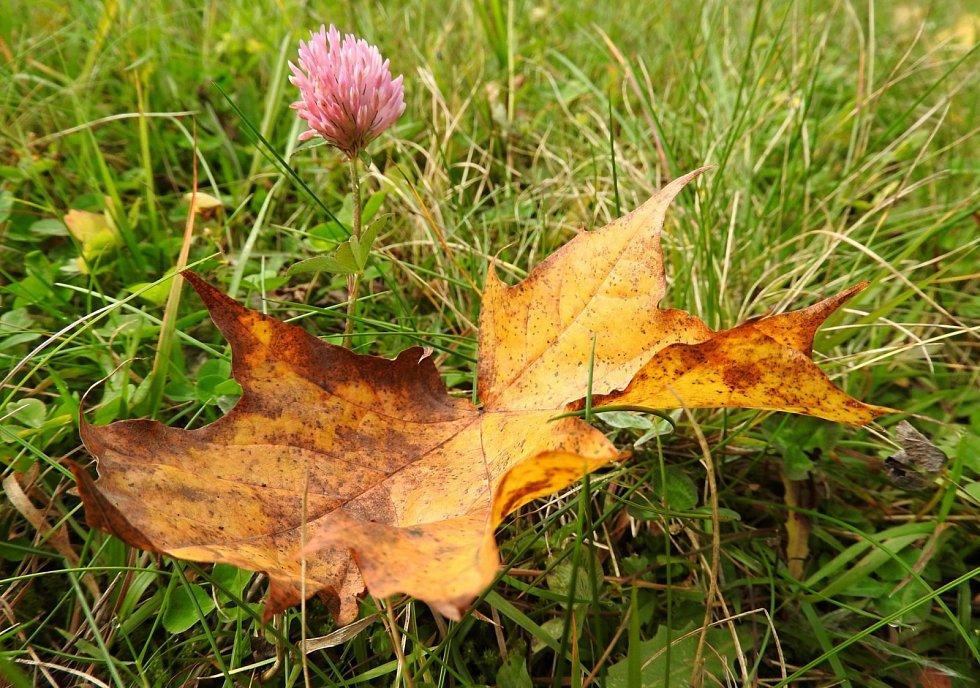 Podzimní mámení