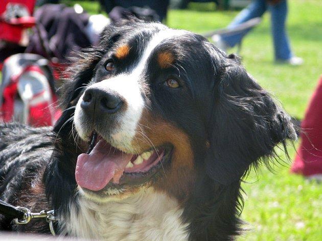 Klubová výstava bernských salašnických psů v Campingu Rožnov.