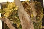 SAMOROST. Kus dřeva, pro někoho kýč pro jiného umění.