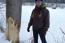 Ohlodané stromy na řece Šlapance jsou jasným znamením toho, že se do zdejších končin po dlouhých letech opět navrátil bobr evropský.