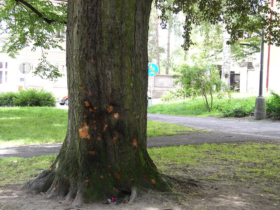 Strom v centru města, za nímž se Kubát schovával a taky odpálil