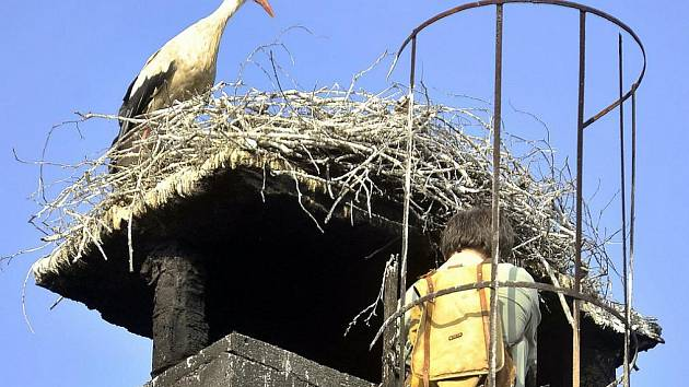 Staré hnízdo stálo na používaném komíně a několikrát shořelo. Nové bylo vytvořeno o 200 metrů dál na stožáru postaveném speciálně pro tento účel. Na původním místě čápi hnízdili 25 let.