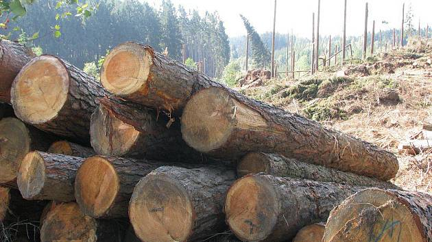 Větrná smršť, která se vloni přehnala nad Přibyslavskem, poničila na tři a půl tisíce metrů krychlových dřeva. Lesní porost u Dolní Jablonné obnoví tisíce sazenic nových stromů.