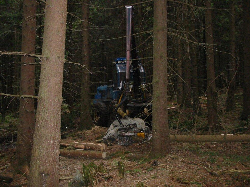 S kůrovcovou hrozbou bojují lesníci ze všech sil, ale bez pomoci státu se neobejdou.
