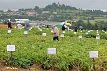 Ve čtvrtek se v Havlíčkově Borové sešli bramboráři. Na poli obdivovali přes 217 odrůd.